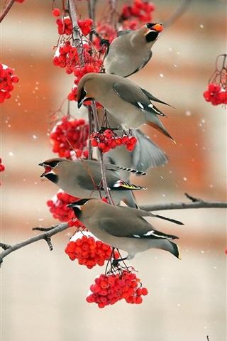 iPhone Wallpaper Birds eat red berries, twigs, snow