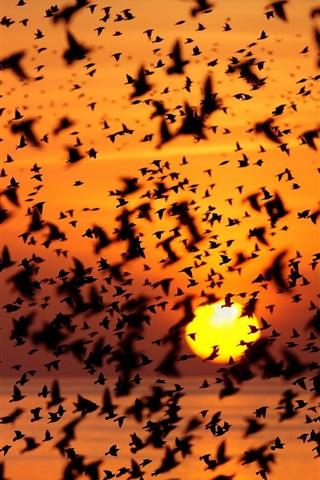 iPhone Wallpaper Birds sky, sunset