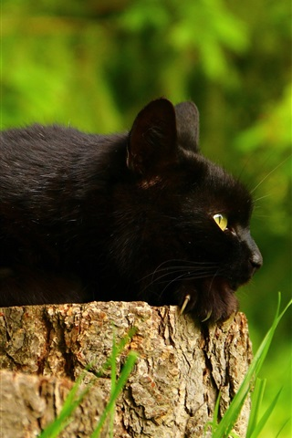 iPhone Wallpaper Black cat rest, stump, flowers