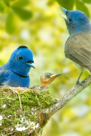 iPhone Wallpaper Blue feather birds family