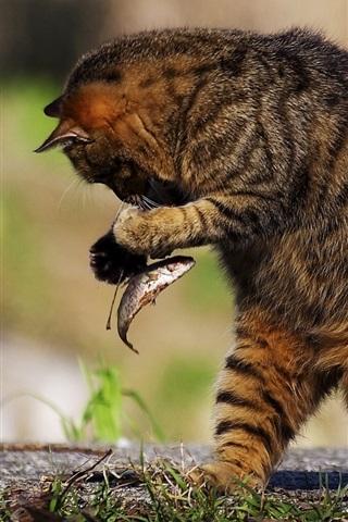 iPhone Wallpaper Cat eat fish