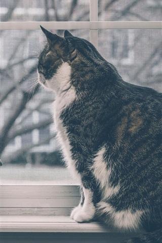 iPhone Wallpaper Cat sit at windowsill, window, gerbera flowers