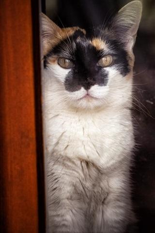 iPhone Wallpaper Cat, wood, window