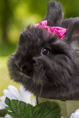 iPhone Wallpaper Cute black rabbit, pets