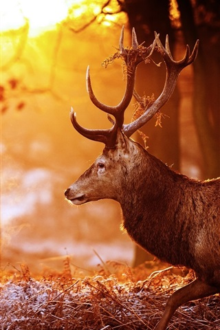 iPhone Wallpaper Deer, forest, trees, sun rays, glare