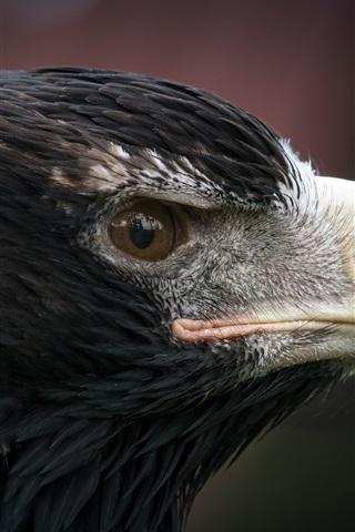 iPhone Wallpaper Eagle head macro photography, predator, eye, beak