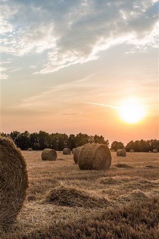 iPhone Wallpaper Fields, hay, sunset, trees