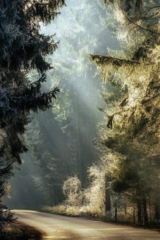 iPhone Wallpaper Forest, trees, road, sunlight