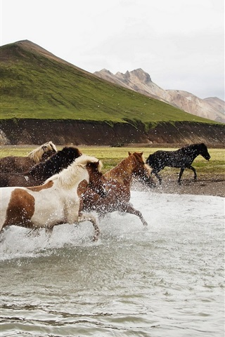 iPhone Wallpaper Freedom horses running in water