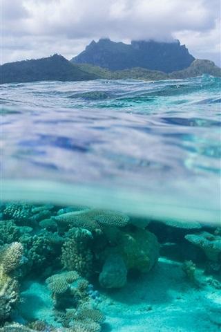 iPhone Wallpaper French Polynesia, Leeward Islands, Bora Bora, corals, sea, underwater