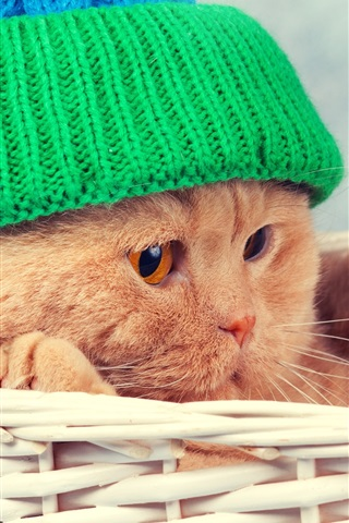 iPhone Wallpaper Funny animal, cat, basket, hat
