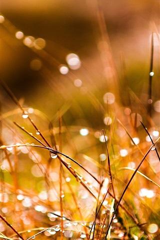 iPhone Wallpaper Grass after rain, water drops