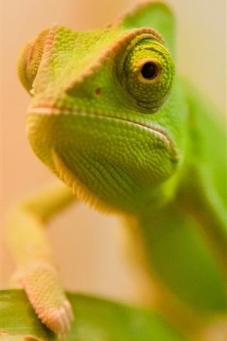 iPhone Wallpaper Green lizard face close-up, bokeh