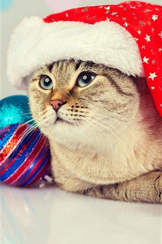 iPhone Wallpaper Lovely cat, Christmas balls, hat