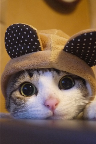 iPhone Wallpaper Lovely kitten look at you, hat, humor