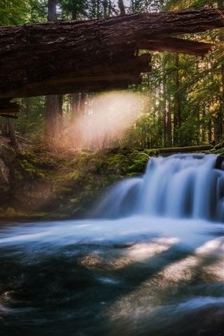 iPhone Wallpaper Oregon, Whitehorse Falls, waterfall, river, trees, USA