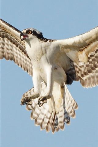 iPhone Wallpaper Osprey flight, wings, sky