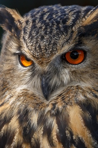 iPhone Wallpaper Owl front view, eyes, black background