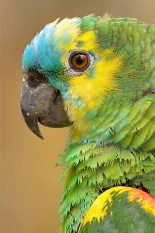iPhone Wallpaper Parrot portrait, green feathers