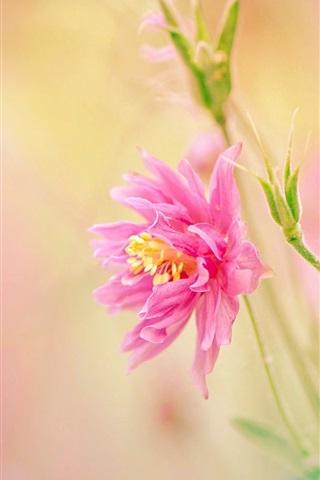 iPhone Wallpaper Pink petals flower, stem, blurry background