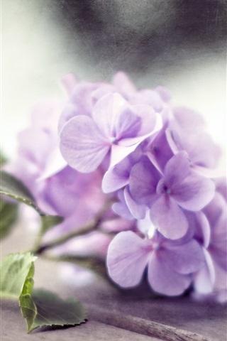iPhone Wallpaper Purple hydrangea flowers, wood board