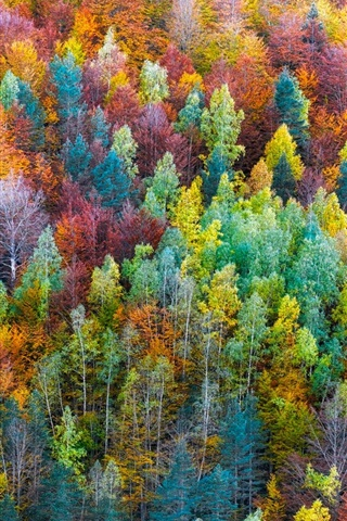 iPhone Wallpaper Rainbow color forest