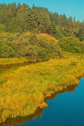 iPhone Wallpaper River, grass, forest, trees, autumn