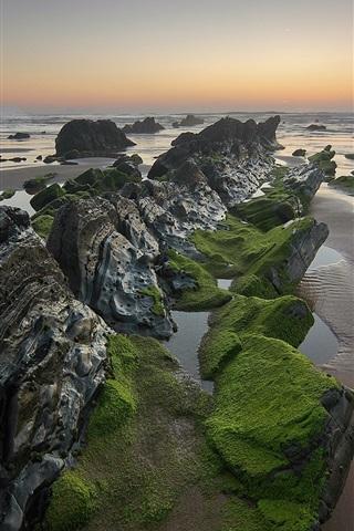 iPhone Wallpaper Sea, rocks, algae, moss, sunset