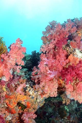iPhone Wallpaper Sea, underwater world, beautiful corals
