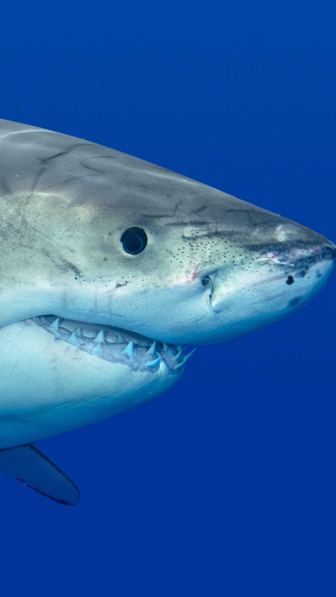 サメ 捕食者 水中 1080x1920 Iphone 8 7 6 6s Plus 壁紙 背景 画像