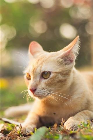 iPhone Wallpaper Summer cat, ground, glare