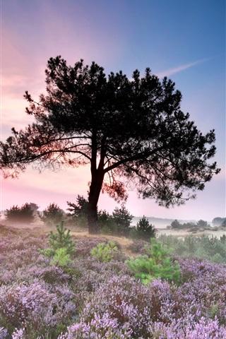 iPhone Wallpaper Tree, flowers, morning, fog