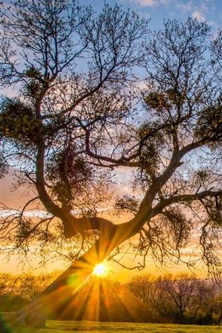 iPhone Wallpaper Trees, grass, sun rays, morning