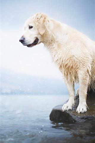 iPhone Papéis de Parede Cão molhado, lago