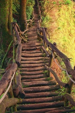 iPhone Wallpaper Wooden bridge, gorge, trees