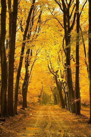iPhone Wallpaper Autumn, forest, trees, path