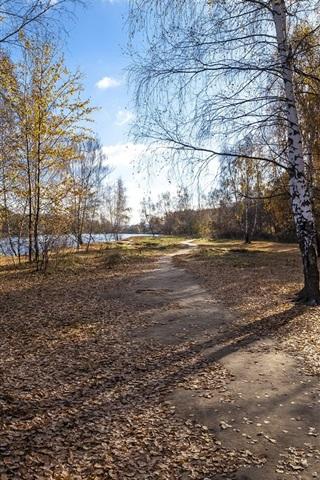iPhone Wallpaper Birch, trees, river, path, foliage, autumn