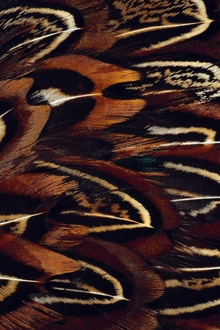 iPhone Wallpaper Bird feathers macro photography