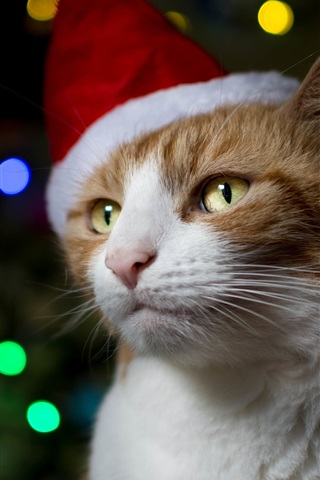 iPhone Wallpaper Cat, hat, Christmas, colorful lights