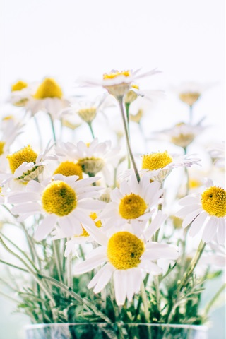 iPhone Wallpaper Chamomile, daisy, bouquet, vase