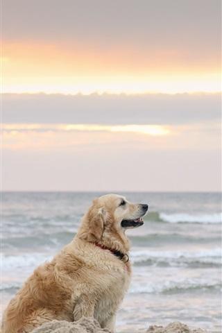 iPhone Wallpaper Dog, beach, sea
