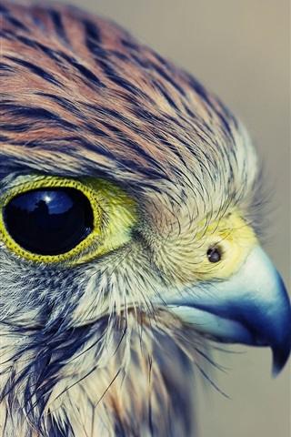 iPhone Wallpaper Eagle baby, head, eyes, beak, feathers