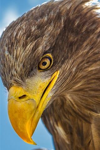 iPhone Wallpaper Eagle head close-up, beak, eye
