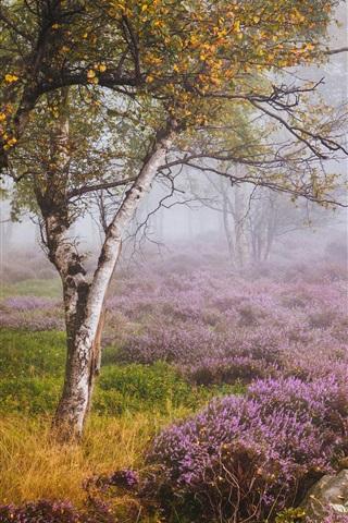 iPhone Wallpaper England, Heather, Derbyshire, birch forest, wildflowers, fog, autumn
