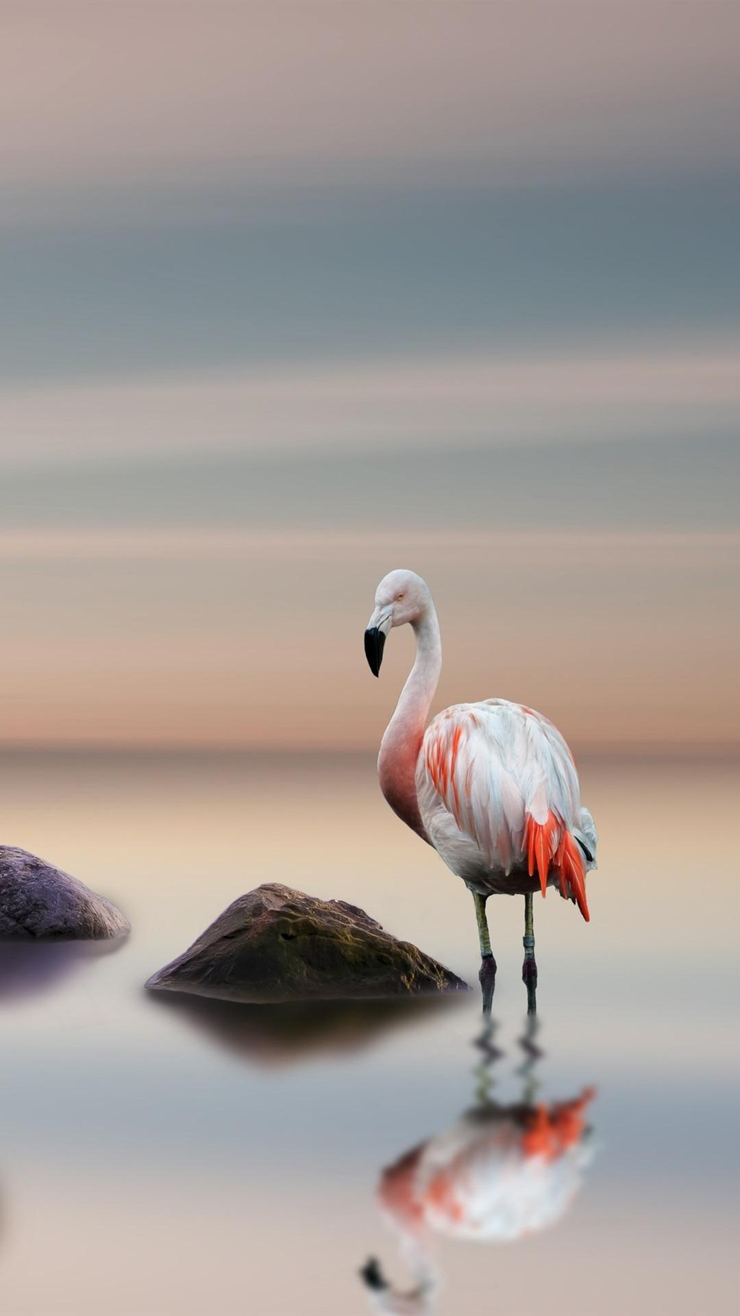 Flamingo Birds Lake Stones 1080x1920 Iphone 8 7 6 6s Plus
