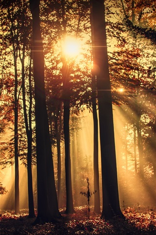 iPhone Wallpaper Forest, morning, sun rays, trees