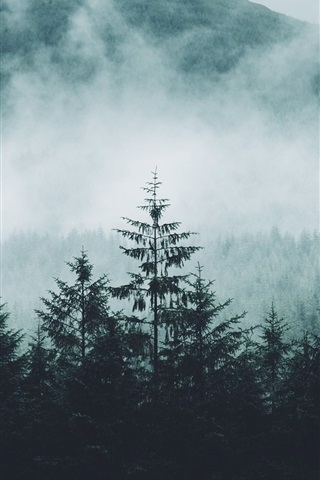 iPhone Wallpaper Forest, mountains, fog, morning, nature landscape