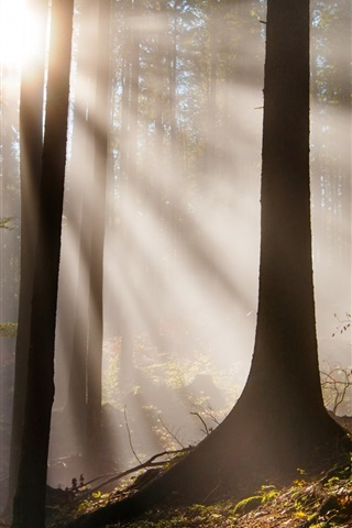 iPhone Wallpaper Forest, trees, sun rays, glare