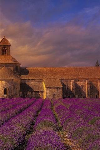 iPhone Wallpaper France, monastery, lavender flowers field