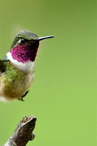 iPhone Wallpaper Hummingbird, flight, wings, green background
